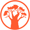 Ancient Baobab Tree -Tree of Life