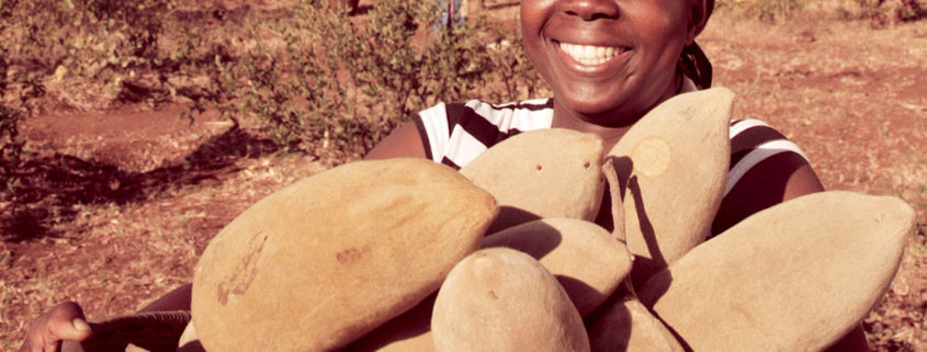 Baobab superfruit gains traction for digestive health and sports nutrition